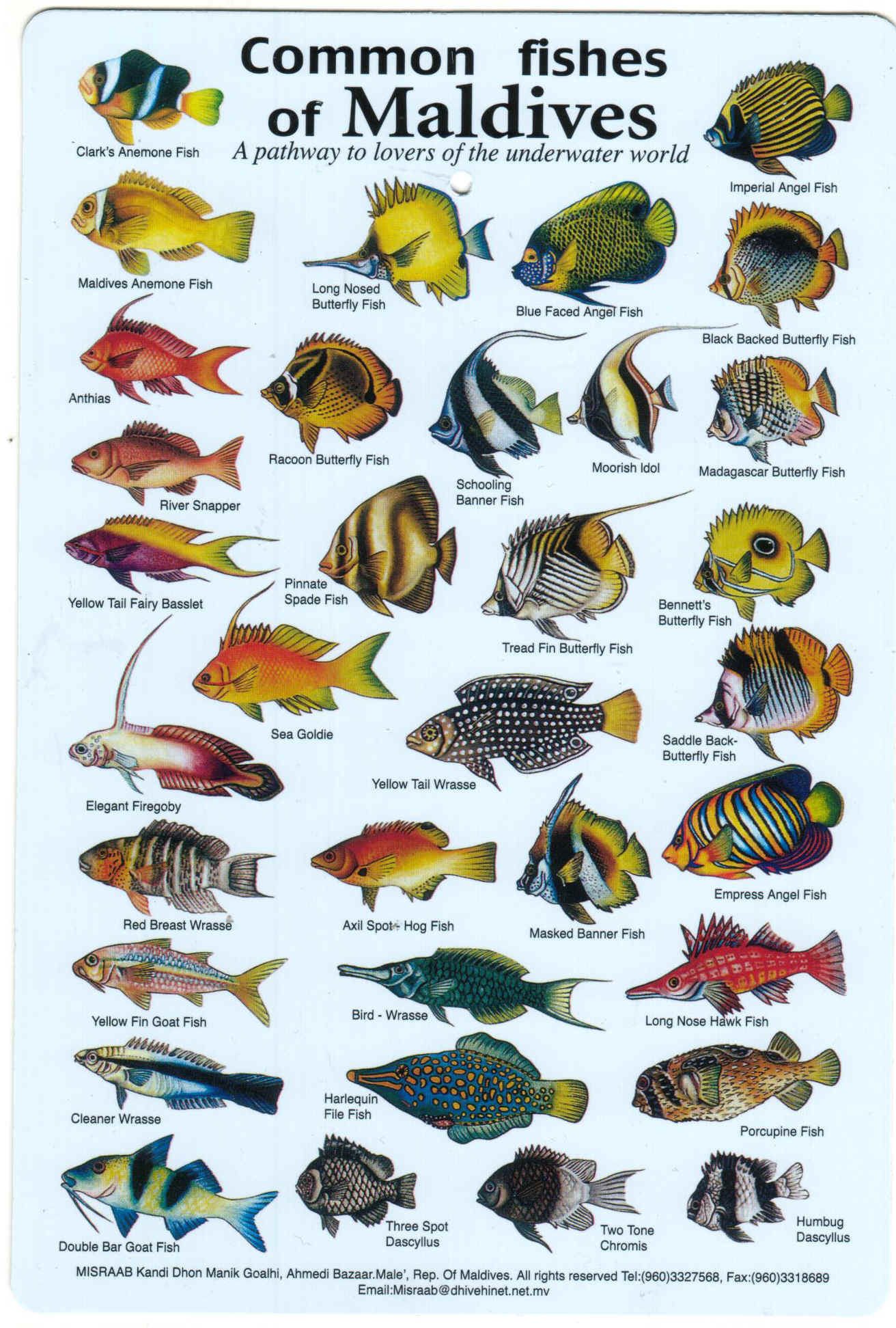 Fishes Of The Maldives Identification Chart Water Resistant Laminated Card